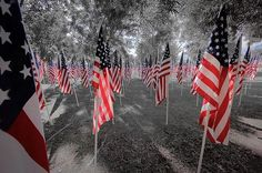 A MUST SEE - AMAZING DISPLAY OF LOVE AND HONOR! 8th Annual Healing Field® November 10 to 17, 2013 at Patriot Park