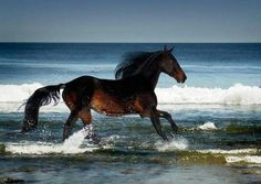 Something I would love to do.  Ride bare back on the beach.