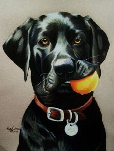 Black Lab with a Yellow Ball in His Mouth