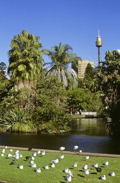 Royal Botanic Gardens in the heart of Sydney, Australia