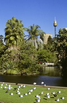 Royal Botanic Gardens in the heart of Sydney, Australia