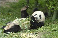 Hi all, Zoo Vienna