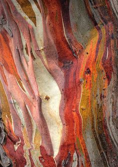 Painting Tree Bark Texture Ideas For 2019 Patterns In Nature, Textures Patterns, Nature Pattern, Art Grunge, Art Et Nature, Photocollage, Tree Bark, Art Abstrait, Texture Art