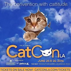 My company @Petwigs will be @catconla this weekend. Come stop by the #Petwigs booth and say hi!