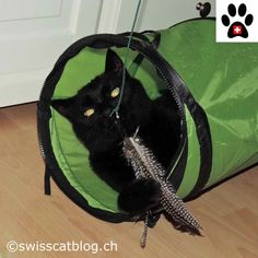 Giveaway (Europe) : win a Kittycobra, and have fun like Zorro ! Giveaway, Have Fun, Europe, Animals, Toy, Cat Breeds, Animales, Animaux, Animais
