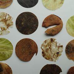 Circles. Compositie van divers gedroogd materiaal, waaronder: aardpeer, avocado, taugé, witte kool en pastinaak. 30x30 cm Trefwoorden: angeliquevandervalk, vegetableworks, kunst, afval, compositie,  circles, plantaardig, eco, patroon