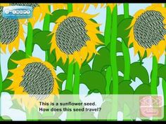 How do seeds travel (Video Lesson) for the young ones! Hunter's learning about the parts of a flower in school right now, too!