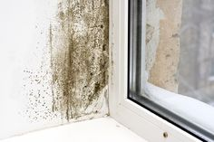 Types Of Mold In Basement - The Best Picture Basement 2020 Mold In Basement, Fee Du Logis, Bad Wand, Mold Prevention, Damp Proofing, Mold Exposure, Types Of Mold, Get Rid Of Mold, Mold In Bathroom