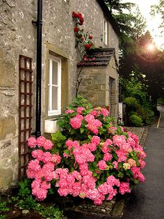 Pink hydrangea // Great Gardens & Ideas //