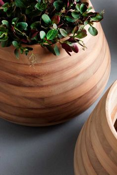 Commissioned by Indigenus, designer Haldane Martin created Tuber, a planter made from Iroko wood.