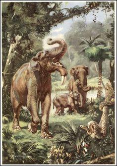 Deinotherium from Prehistoric Animals (1960) // Zdeněk Burian #vintage #paleoart