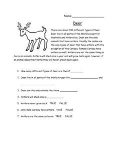 Deer reading comprehension