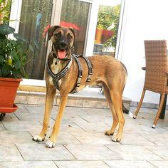 👛 sew lover 👖 (@turquoise.l_o_v_e) • Instagram-Fotos und -Videos turquoise.l_o_v_e #hotinthecity #balou #instadog #dogsofinstagram #blaire Indie, Lovers, Sewing, Dogs, Pictures, Animals, Turquoise, Instagram, Videos