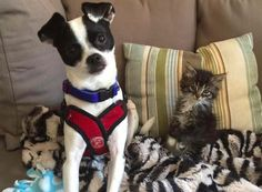 Dog Meets Foster Kitten And Decides He's Keeping Her For Good