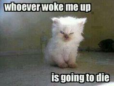 Bahahahaha some days, yes!