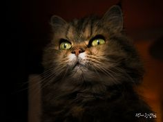 Malicious Cat | Flickr - Photo Sharing!