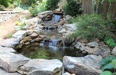 My pond-a work in progress