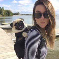 My #human does the work TAG us to be featured  ~~~ www.jointhepugs.com/ ~~~ #pugpower #dogs #pugsnotdrugs #pugpuppy #puglove #cuteness #pugs #puglover #pugnation #dogstagram #dogsofinstagram #puppyeyes #pugstagram #pugworld #pugplanet #dogsofinstaworld #petstagram #instadog #instapug #babypug #pugsofig #pugsforever #pugoftheday #dogsofig