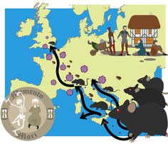 BBC - KS3 Bitesize History - The Black Death : Revision, Page 2