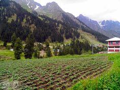 The Valley Of Dreams  Naltar Valley, Gilgit Pakistan.