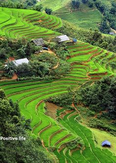 Rice terraced fields, Vietnam