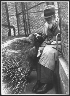 Seventy-seven-year-old Mr Elwell, a daily visitor to London Zoo since World War I, feeds a porcupine aptly named Prickly, in his cage. England, 1944.