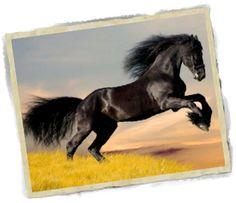 Realizamos acupuntura veterinaria Madrid para animales domésticos y caballos ¡Llámanos!