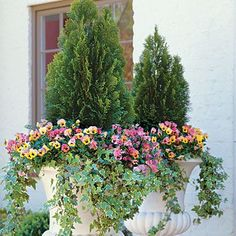 Pair colorful annuals with an evergreen for an established planting that can still change from season to season
