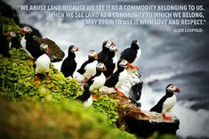 quotes on nature and our place within it:Community- Aldo Leopold