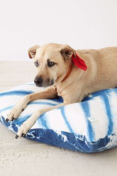 indigo dog bed - such a sweet gift for your favorite pooch