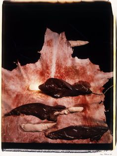 Helen Chadwick, Meat Abstract #3, 1989