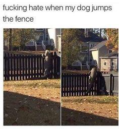 Alligator jumping the fence like a dog