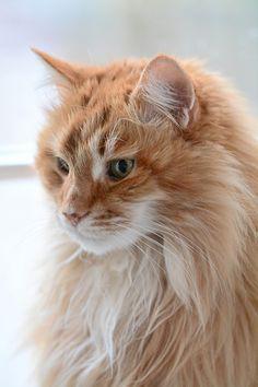 Milhaus, Bad Cat   Flickr – Compartilhamento de fotos!