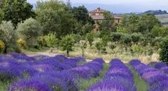 Azienda Agrituristica Podere Pratovecchio Montefollonico Podere Pratovecchio is set in an ancient villa on the Tuscan hills, between Pienza and Montepulciano. This pleasant agriturismo has many ancient fruit trees and varieties of ancient roses.