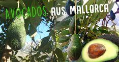 fetasoller.com Naturbelassenen Avocados aus Mallorca! Eggplant, Fruit, Vegetables, Stuffed Avocado, Products, Eggplants, Vegetable Recipes, Veggies