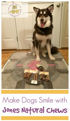 Looking for awesome treats for your favorite dog? See what Ivi thinks of Jones Natural Chews newest variety of USA made treats here!