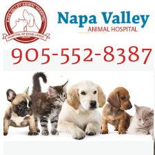 Contact Us At  To Discuss Your PetS Health Problems