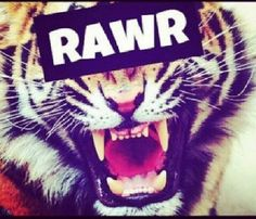 #wallpapers #rawr #tiger #strong #beautiful #pretty