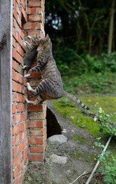 Spider cat, spider cat...
