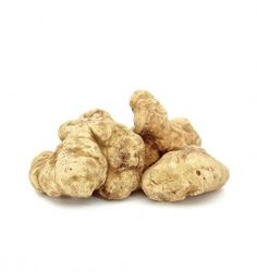 Weißer Trüffel (Tuber Magnatum Pico). White Truffle - Tuber Magnatum Pico. Fresh Truffle from Italy. White Truffle is also called the white gold.
