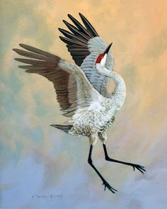 crane painting - I got a video of a sandhill crane showing off, calling, lifting off the ground near Sophia's school at a waterhole Watercolor Bird, Watercolor Paintings, Crane Drawing, Crane Dance, Crane Bird, Bird Quilt, Bird Artwork, Tropical Art, Animal Paintings