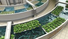 Aquaponics is a combination of Aquaculture & Hydroponics. Water from a fish tank circulates through a grow bed delivering nutrients to plants grown there. Nitrifying bacteria convert fish waste…