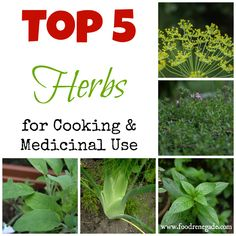 Top 5 Herbs To Grow For Cooking & Medicinal Use