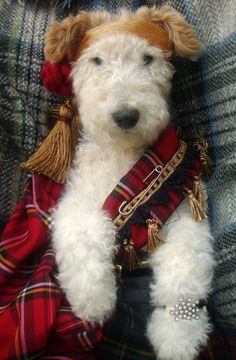 Fox Terrior in Tartan