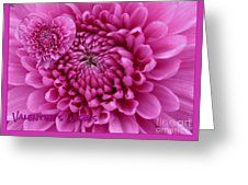 Pink Dahlia Valentine's Wishes Greeting Card by Joan-Violet Stretch