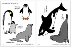 Colored Antarctic animals