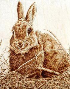 """Rabbit in the Hay"" Animal Pyrography by Cara Jordan"