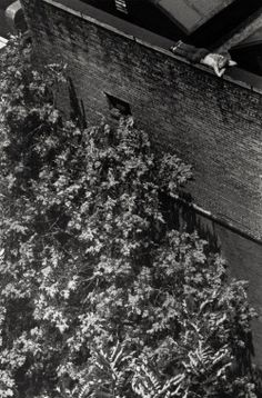 André Kertész, 1970