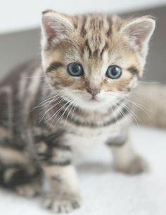 so cute! #cat