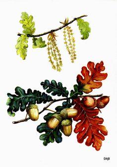 Boberkowy World : Jesienne pomoce dydaktyczne Parts Of A Flower, Oak Leaves, Furry Drawing, Forest School, Garden Trees, Autumn Activities, Illustrations, Colored Pencils, Nature